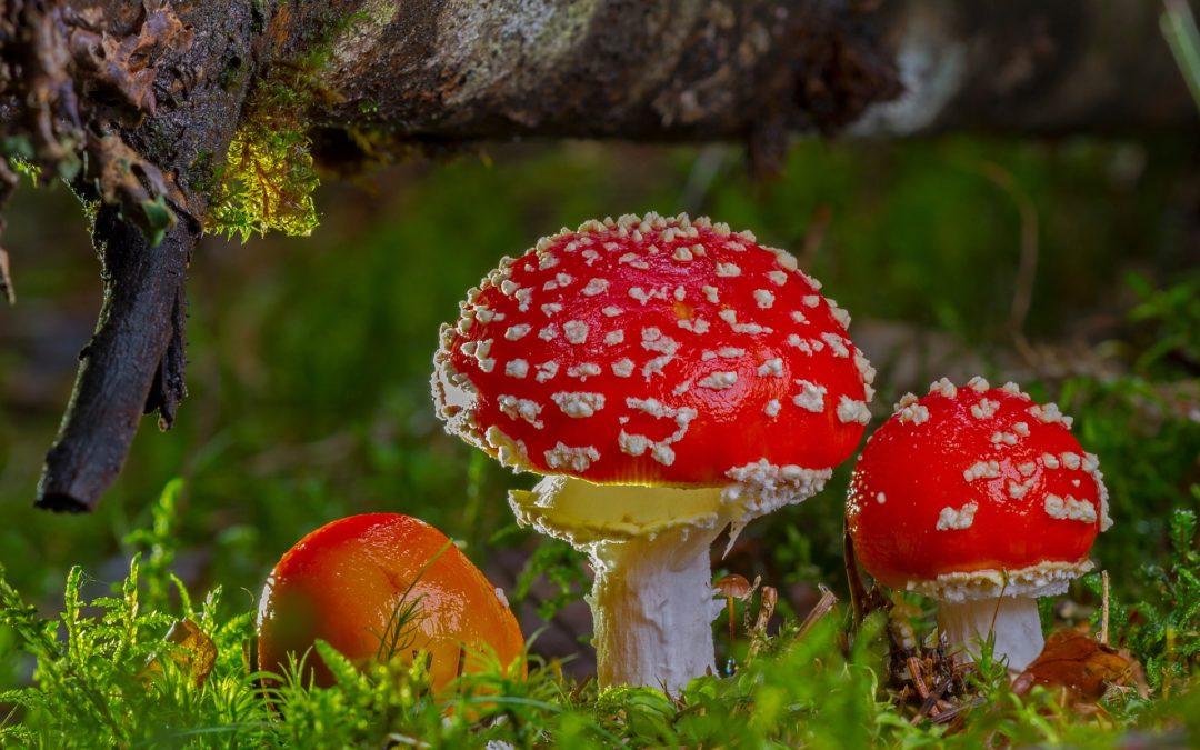 Efectos del consumo de ketamina, setas alucinógenas y LSD