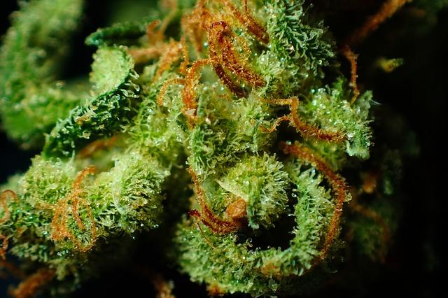 drogas-blandas-clasificación